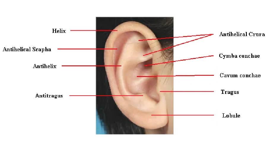 ศัลยกรรมหูกาง otoplasty